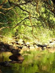 Tauranga_Living_Dharma